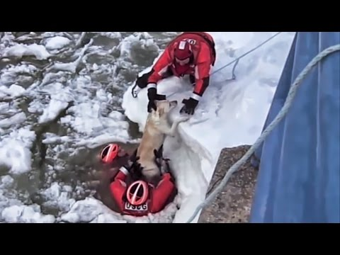 Wendy - US Coast Guard Uses Macaroni To Rescue Dog Stuck On Island
