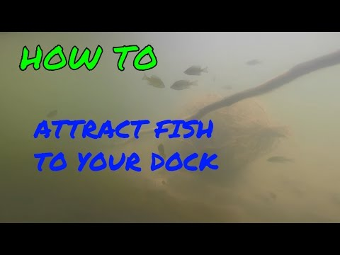 How to Attract Fish to Your Dock ~ 3 EASY Tips