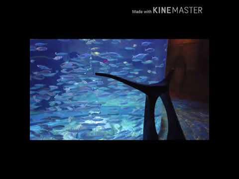 Dubai Aquarium, The Lost Chambers @ Palm, Atlantis