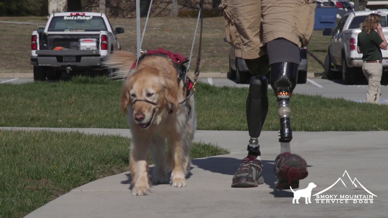 Service Dogs for Veterans - Smoky Mountain Service Dogs