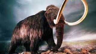 Awesome MAMMOTHS  Discovery Animals Documentary HD