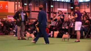 Dfs Crufts 2010 Best Of Breed Pug