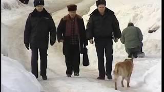Бродячие собаки насмерть загрызли человека во Владимире.