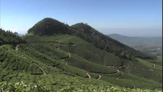 Weekend Explorer-Tea in Munnar, India