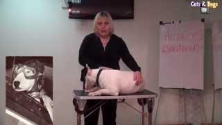 Cats&DogsTV - УДИВИТЕЛЬНЫЙ МИР СОБАК - АНГЛИЙСКИЙ БУЛЬТЕРЬЕР / BULL TERRIER DOG BREED