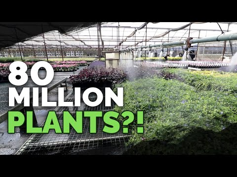 How To Grow MILLIONS Of Plants A Year: Plant Nursery Tour