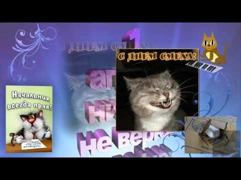Смешные кошки 1 апреля поздравляют в день смеха, поздравление друзьям родным любимым с днем смеха - Ржачные видео приколы