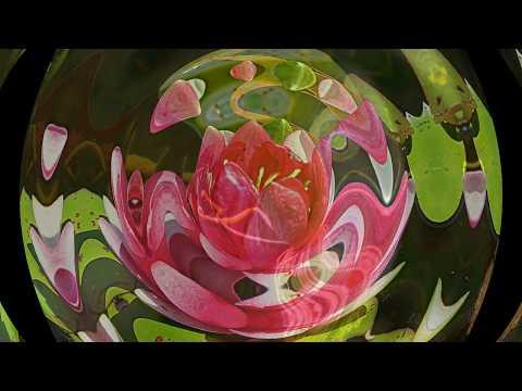 Аленький цветочекъ Цветок в ладони