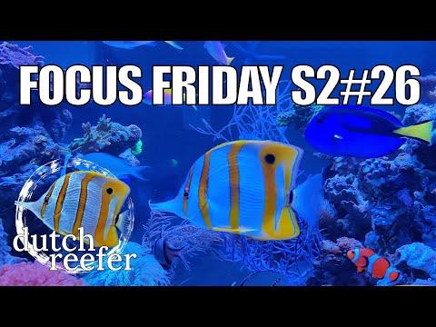 FF S2#26   Fish Update - Copperband & Friends