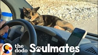 Stray Kitten Won't Let Traveling Couple Leave Her Behind | The Dodo Soulmates