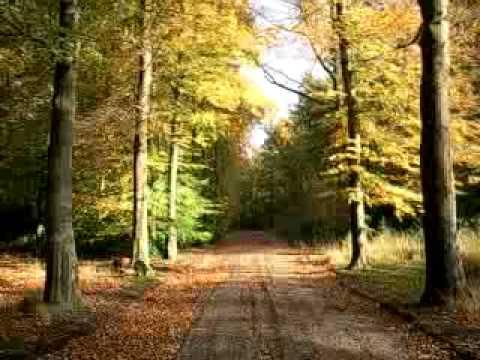Marillion - Beautiful (Forest-Netherlands autumn 2008)