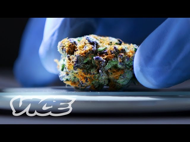 Vice Video About How To Make Sure Your Legal Weed Is Safe to Smoke