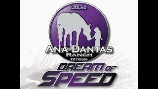 O tradicional Leilão Ana Dantas Ranch – Dream Of Speed acontece no ...