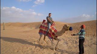 Прокатился на верблюде. Сафари в Дубае. Пляжи и цены.