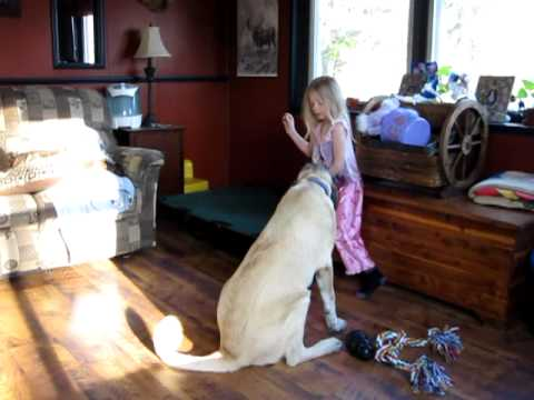 My 5 year old with my 5 month old Kangal puppy