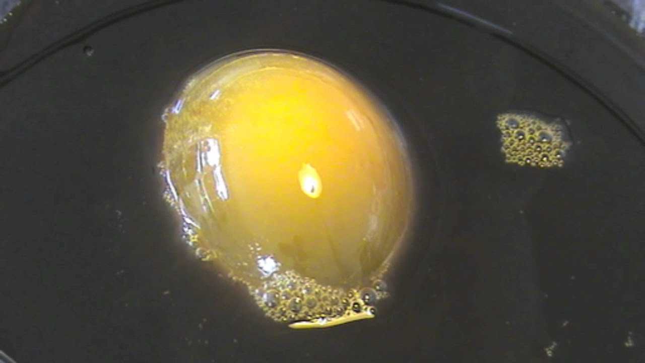 Demonstration Of Osmosis Using An Egg