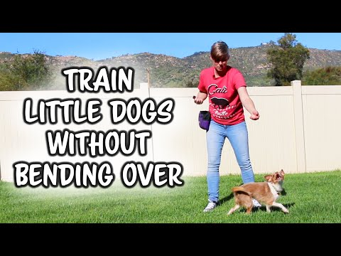 Train your little dog without bending over