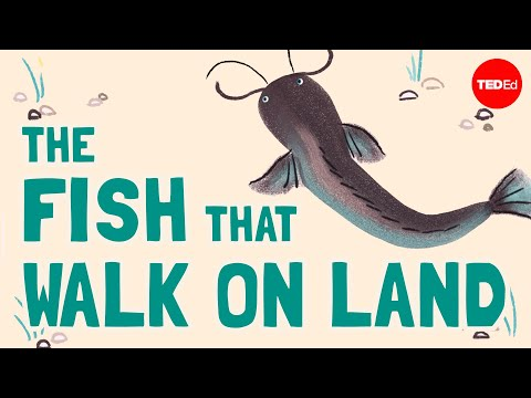 Video image: The fish that walk on land - Noah R. Bressman
