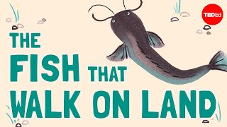 The fish that walk on land - Noah R. Bressman