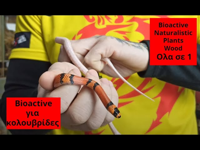 Στήσιμο τερραριουμ φιδιού Bioactive Naturalistic Part A | Feeders Strs 73