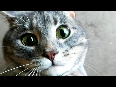 FUNNY CUTE CAT VIDEOS OF THE WEEK! 🐱