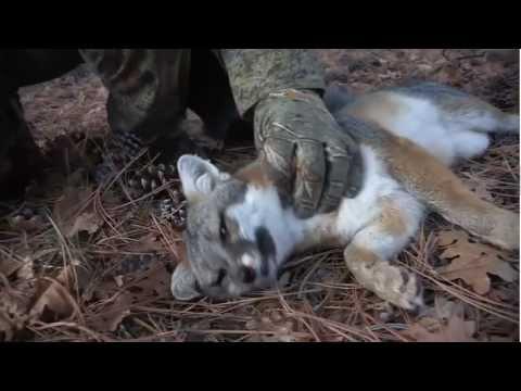 FOXPRO Furtakers Webisode 5 Gray Fox Arizona All Predator Calls