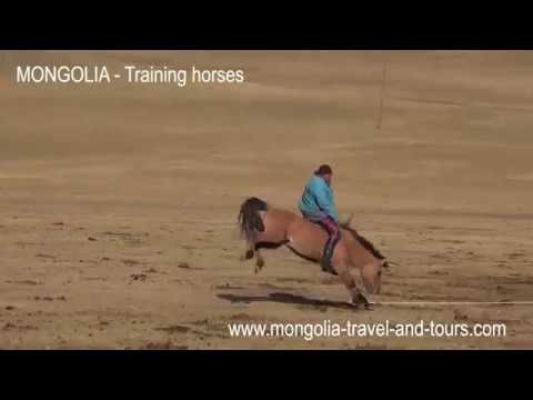 MONGOLIA - How to break a horse Mongolian style - By Mongolia Travel & Tours
