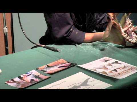 Preserving a Great White Shark Jaw [Warning: Graphic Images]