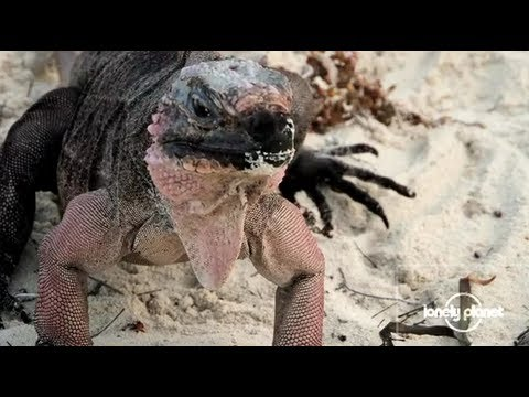 Wildlife of Exuma Island, Bahamas - Lonely Planet travel video