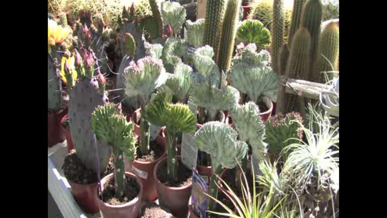Richtiger standort f r zimmerpflanzen youtube - Standort zimmerpflanzen ...