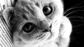 Развитие ребёнка: логоритмика Т. Железновой. Котик