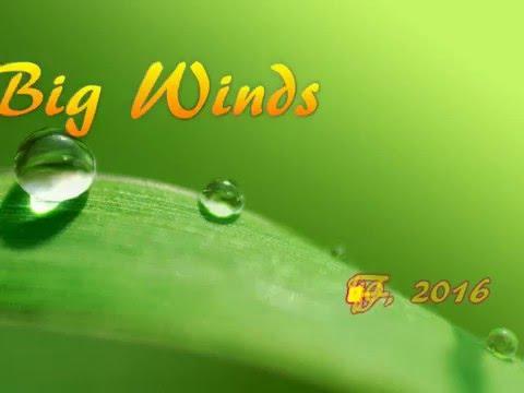 Costa Rica Winds