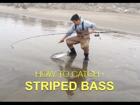 TIPS ON HOW TO CATCH STRIPED BASS - Surf Fishing