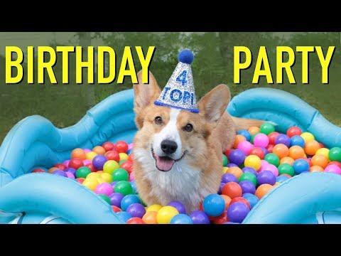 MY 4th BIRTHDAY! - Topi the Corgi