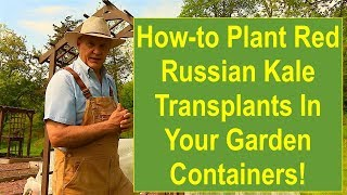 Tips and Ideas on How-to Plant Red Russian Kale Transplants in Your Garden Containers