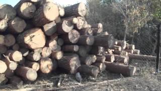 Обзор леса-кругляка 60 м3 для строительства дома