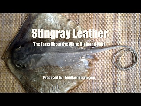 Stingray Leather - The Facts About The White Diamond