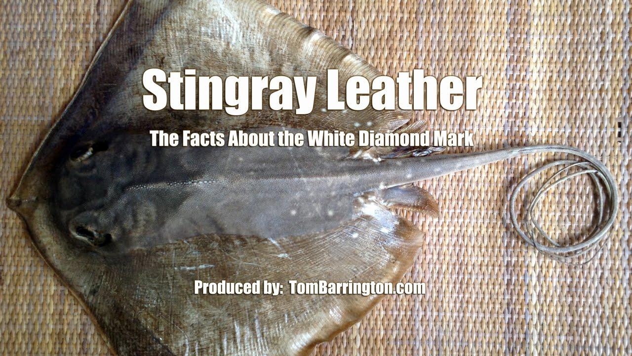 catfish skin leather