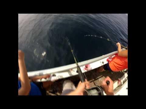 Reel animals fishing deep sea fishing party cruise j for Lady stuart deep sea fishing