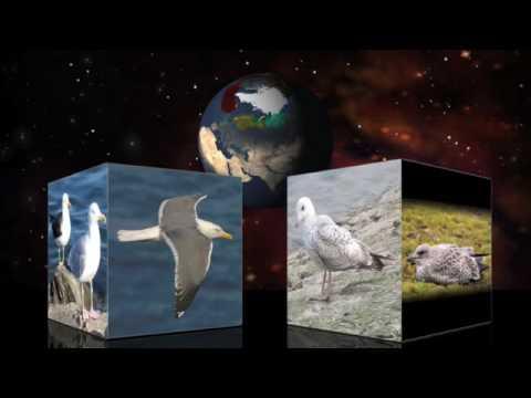 Evoluţia Vieţii Pe Terra - Partea A 3-a