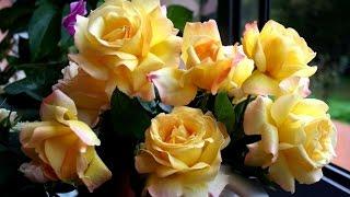 жёлтые розы (   yellow roses )(моё новое видео сегодня была у подруги в гостях,у неё много разных цветочков. Можно сказать что она фанат..., 2014-07-01T18:48:37.000Z)
