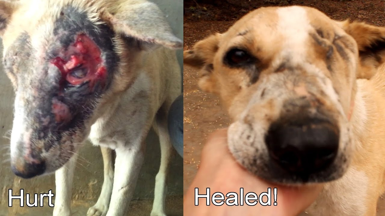 injured dog If your child has been injured by a dog, you might be facing medical bills plus the aftermath of the attack including scarring, disfigurement and psychological trauma.