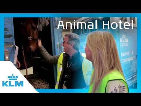 KLM Intern On A Mission - Animal Hotel