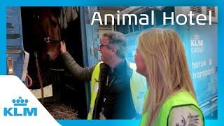 KLM Intern On A Mission - Animal Hotel