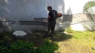 Ciro il giardiniere