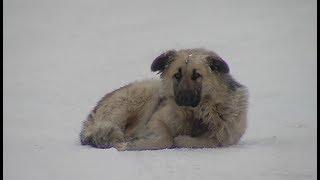 В Югре владельцев собак призовут к ответственности с помощью закона