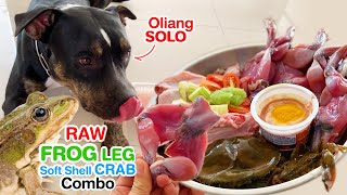 Oliang the Pit Bull SOLO 1st time eats RAW Frozen Frog leg, Frozen ...