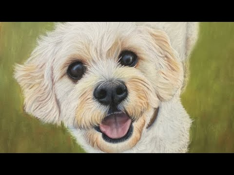 Painting a Dog With White Fur in Soft Pastels (Realistic Pet Portrait  Drawing in Pastel Pencils)