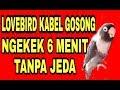 Lovebird Kabel Gosong Ngekek  Menit Saingan Lovebird Marco  Mp3 - Mp4 Download