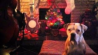 Pit Bulls & Parolees - Rescuing the Holidays